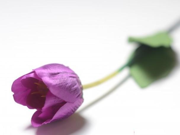 13143 Одиночный тюльпан (h-68 см) (уп 1 шт)